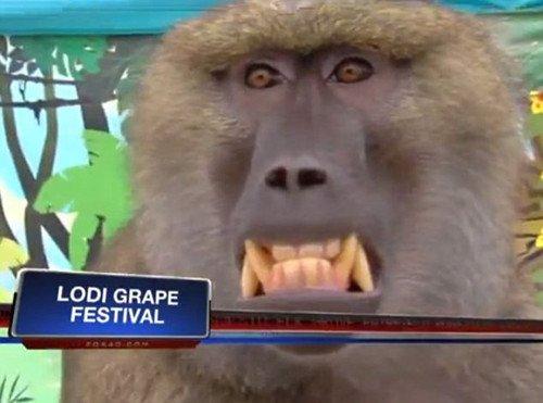 女主持节目现场遭狒狒袭胸 死抓不放咧嘴大
