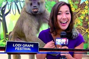 美国女记者直播时遭狒狒袭胸15分钟