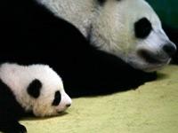 """南都人物志:熊猫""""妈妈"""""""