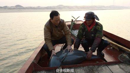 江西鄱阳湖一头江豚被渔网困住获救(组图)