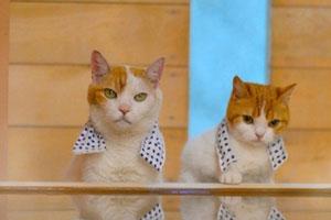 猫猫带你遍览日本好风光