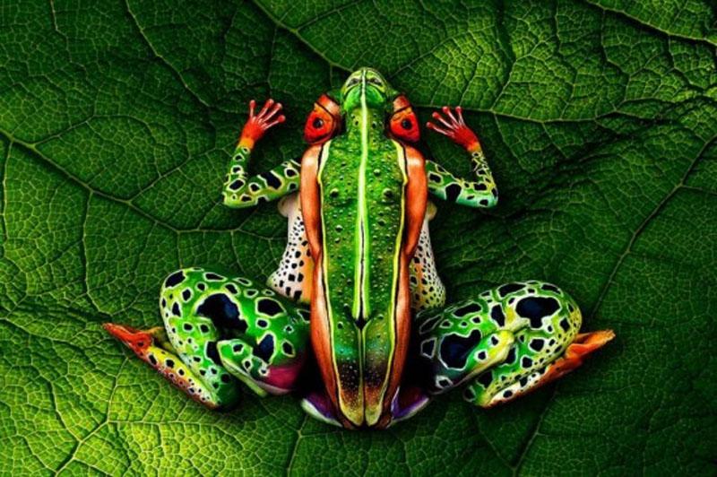 意大利人体彩绘艺术家将模特变鹦鹉 肉眼难辨