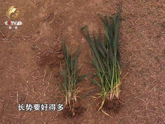 央视曝南阳水源保护区违建别墅 农民土地被强卖