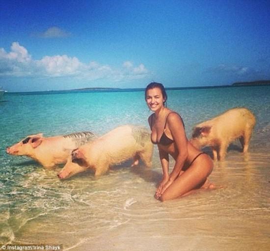 名模伊莉娜·莎伊克穿比基尼与三只猪游泳