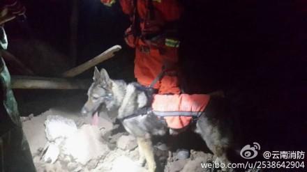 云南鲁甸6.5级地震:搜救犬在行动